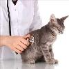 Ветеринарные клиники в Путятино